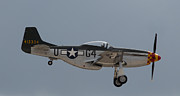 P-51 Mustang Photos - P-51 Landing Configuration by John Daly