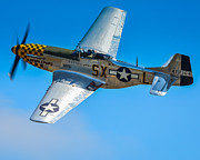 P51 Photo Posters - P-51 Mustang Break Out Roll Poster by Puget  Exposure