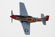 Lockheed Photos - P-51 Mustang by Paul Job