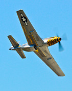 North American P51 Mustang Framed Prints - P-51 Mustang Wing Over Framed Print by Puget  Exposure