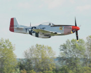 Gathering Photos - P-51D Mustang Shangrila by Alan Toepfer