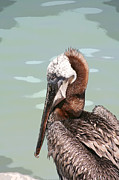 Bob and Jan Shriner - P is for Pelican