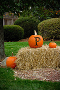Halloween Metal Prints - P is for Pumpkin Metal Print by Amy Cicconi