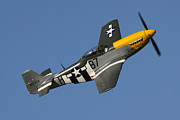 Bomber Escort Photo Framed Prints - P51 Mustang Ferocious Frankie Framed Print by Ken Brannen