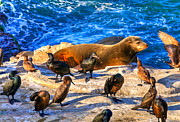 Cormorants Prints - Pacific Harbor Seal Print by Jim Carrell