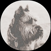 Schnauzer Art Photos - Pack Leader by Mickey Harkins