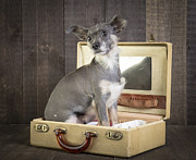 Pet Photo Prints - Packed and Ready to Go Print by Edward Fielding