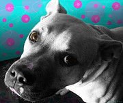 Cute Dogs Digital Art - Paco by Shawna  Rowe