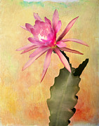 Robert Jensen Art - Padre epiphyllum bloom by Robert Jensen