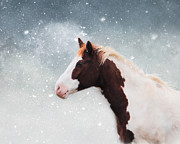 Jai Johnson - Paint Horse in the Snow