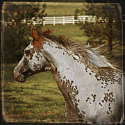 Forelock Photos - Paint Portrait D6131 by Wes and Dotty Weber