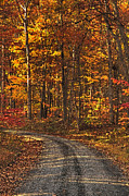 Wooded Digital Art Framed Prints - Painted Autumn Country Roads Framed Print by Lara Ellis