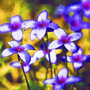 Tiny Bluet Prints - Painted Bluets Print by Kathy Clark