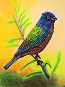 Screen Print Drawings Framed Prints - Painted Bunting bird Framed Print by Zulfiya Stromberg