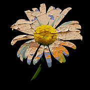 Ian Jeffrey - Painted Daisy