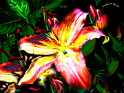 Horticulture Mixed Media Posters - Painted Lily Poster by Patricia Bunk