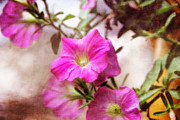 Joan Bertucci - Painted Petunias