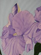 Purple. Iris. Buds Photos - Painted Purple Irises by Margaret Newcomb