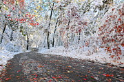 New England Snow Scene Prints - Painted Snow Print by Catherine Reusch  Daley