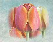 Combination Mixed Media - Painted Tulips by Jayne Carney