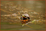Fuad Azmat Prints - Painted Turtle Print by Fuad Azmat