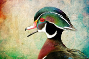 Steve McKinzie - Painted Wood Duck