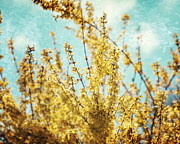 Forsythia Photos - Painterly Forsythia by Lisa Russo