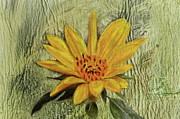 Sandi OReilly - Painterly Sunflower