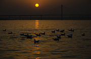 Ganga Photos - Painting a golden picture by Rohit Chawla