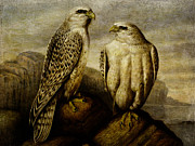 Pamela Phelps - Pair of Falcons
