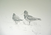 Seashore Drawings Metal Prints - Pair of Pied Oystercatchers Metal Print by Colin L Williams
