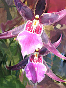 Cattleyas Posters - Pair of Purple Cattleya Orchids Poster by Elaine Plesser