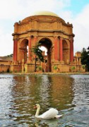 John King - Palace of Fine Arts Swan...