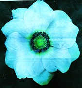Anne-Elizabeth Whiteway - Pale Blue Petals of...