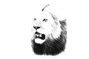 Animal Portraits Posters - Pale Face Lion - Kenya Poster by Aidan Moran