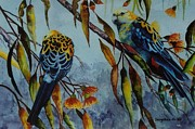 Sandra Sengstock-Miller - Pale Headed Rosellas