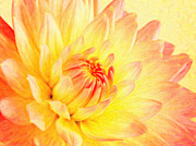 Difficulties Love Posters - Pale Pink And Yellow Dahlia Poster by MotionAge Art and Design - Ahmet Asar