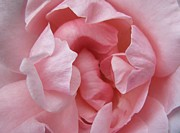 Carol Welsh - Pale Pink Rose Center
