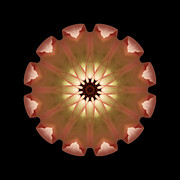 Pale Pink Tulip Flower Mandala Print by David J Bookbinder