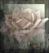 Photographs With Red. Prints - Pale Rose Photoart Print by Debbie Portwood