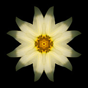 Pale Yellow Daffodil Flower Mandala Print by David J Bookbinder