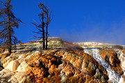 Yellowstone National Park Photos - Palette Spring Steam by Brian Harig
