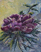 Joyce Hutchinson - Paletted Peony