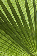 Palm Abstract Print by Patty Colabuono