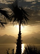 Outlook Photos - Palm Antalya Sea Outlook Palm Trees Idyll Holiday by Paul Fearn