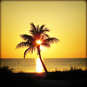 Florida Flowers Posters - Palm at Sunset Poster by Chris Andruskiewicz