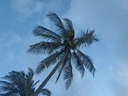 Butch Phillips - Palm Breezes
