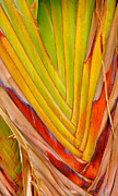 Frond Framed Prints - Palm Colors Framed Print by Steven Ainsworth