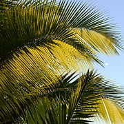 Corinne Rhode - Palm detail