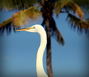 Long Neck Prints - Palm Egret Print by Karen Wiles